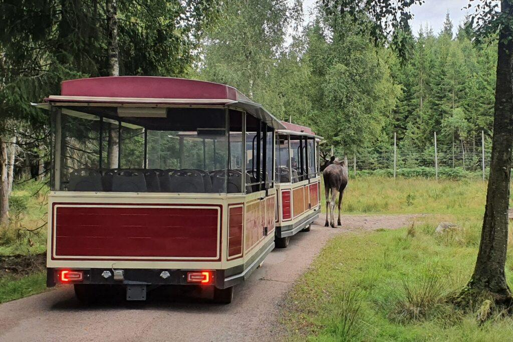 elandensafari in Zweden
